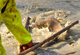 Komisja o hodowli ryb