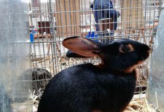 Weekend ze zwierzętami hodowlanymi w Zakrzowie